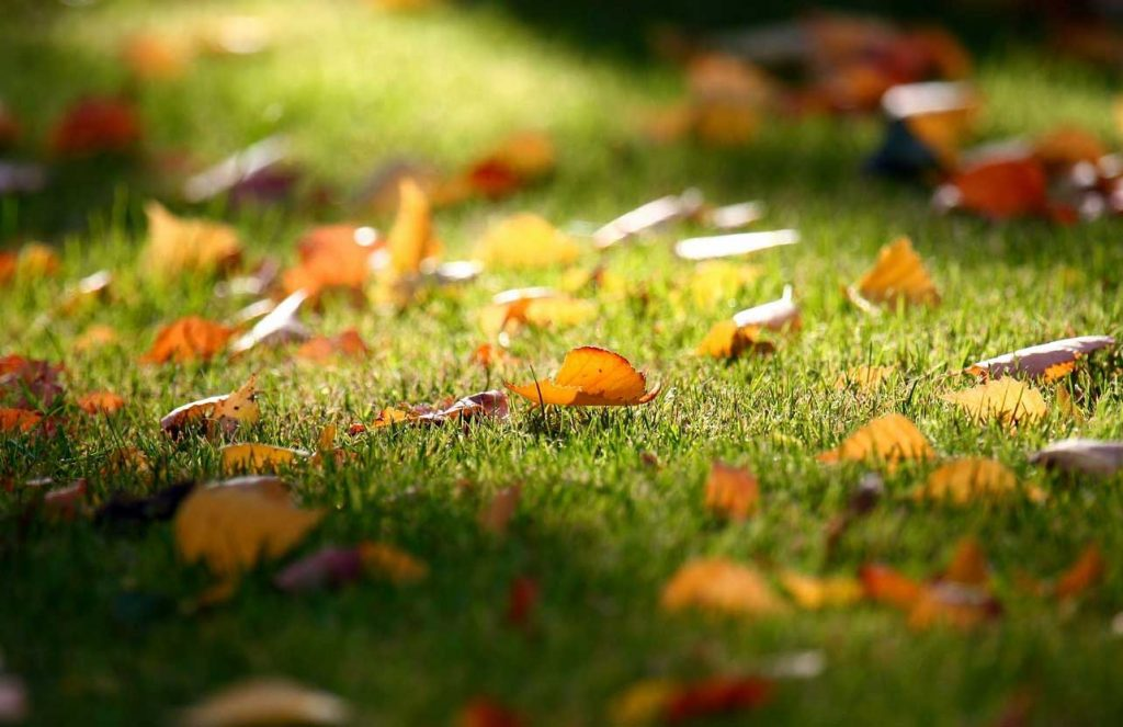 Autumn-Leaves-on-a-Garden-Lawn
